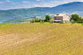 Farmhouse and Vineyard Landscape, Tuscany Stock Image