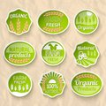 Farming harvesting and agriculture stickers set of natural organic fruits vegetables vector illustration Stock Photos