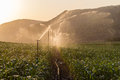 Farming maize crop water sprinklers getting from at sunset Royalty Free Stock Photos