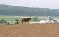 Farming the old fashioned way strasburg pa may amish farmer tills ground on may in strasburg pa amish continue to use horses and Stock Photography