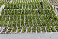 Farming Seedlings Vegatables Stock Photos
