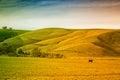 Farmland in Australia