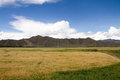 Farmland the beautiful view of tibet china Stock Photos