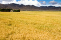 Farmland the beautiful view of tibet china Stock Photo