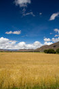 Farmland the beautiful view of tibet china Royalty Free Stock Photography