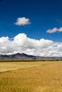 Farmland the beautiful view of tibet china Royalty Free Stock Images