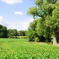 Farmland Crops Royalty Free Stock Images