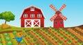 Farmland with crops on the farm Royalty Free Stock Photo