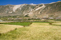 Farmland the of highland barley tibet china Stock Photos