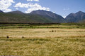 Farmland the of highland barley tibet china Royalty Free Stock Photography