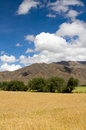 Farmland the of highland barley tibet china Stock Image