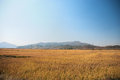 Farmland in liaoning province china Stock Photo