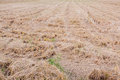 Farmland with straw and stubble cereals corn cornfield Royalty Free Stock Images