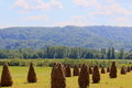 Farmland in summer transylvania romania Royalty Free Stock Photography
