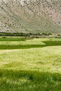 Farmland view of tibet china Royalty Free Stock Images