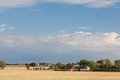 Farms on langeland two in the fields near bagenkop Royalty Free Stock Images