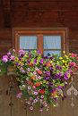 Farmstead window with colorful flower box petunias and geranium Stock Photography