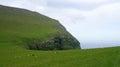 Faroe islands sheeps on the mountain eysturoy island road to gjov in Royalty Free Stock Photos
