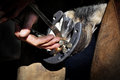 Farrier taking off the nail from horseshoe on a hoof Royalty Free Stock Images