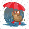 Fashion owl under an umbrella in the rain