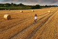 Fashion photo, beautiful woman cycling in a wheat field, a lot of bales of wheat Royalty Free Stock Photo