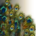 Fashion vector peacock feathers illustration in blue and green c Royalty Free Stock Photo