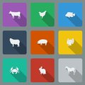 Fashionable varicolored flat icons with long shadows types of meat products. Nine animals on a bright background. Royalty Free Stock Photo
