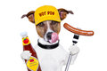 Fast food hungry dog Stock Photo