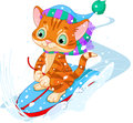 Fast fun kitten cute sledding downhill winter snow mountain Royalty Free Stock Images