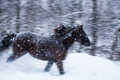 Fast horse galloping during a blizzard in nature with motion blur Stock Photography