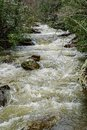 A Fast Moving Mountain Stream in Goshen Pass, Virginia