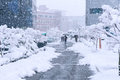 A fast-moving snowstorm arrived in the Korea area. Royalty Free Stock Photo