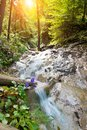 Fast river in Slovak Paradise Royalty Free Stock Photo