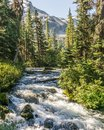 Fast water stream in wild mountain creek in Joffre Lakes Provincial Park green forest landscape. Royalty Free Stock Photo