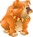 Fat bulldog orange isolated illustration Royalty Free Stock Image