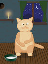 Fat cat with milk at night Stock Images