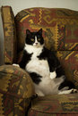 Fat cat on recliner a sits back in like his human Royalty Free Stock Images