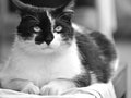 Fat cat thinking about frisks Stock Images