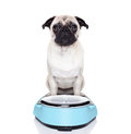 Fat dog on scale Royalty Free Stock Photo