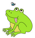 Fat funny frog Stock Photos