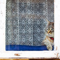 A fat grey tabby cat surveying the street from a window Royalty Free Stock Photography