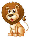 A fat lion illustration of on white background Royalty Free Stock Image