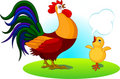 Father Rooster and Baby Chick Stock Photography