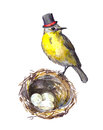 Father`s day illustration. Vintage bird in tall hat at nest with eggs. Watercolor