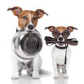 Father and son dogs two with food bowl leather leash Stock Photography