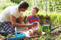 Father and son harvesting carrots on allotment smiling to each other Royalty Free Stock Images