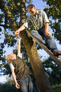 Father and son (7-9) picking apples, man on ladder, low angle view Royalty Free Stock Photo