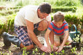 Father and son planting seedling in ground on allotment outdoors kneeling down Royalty Free Stock Photo