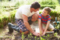 Father and son planting seedling in ground on allotment outdoors smiling at each other Royalty Free Stock Images