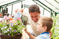 Father and son watering plants in greenhouse close up of having fun Royalty Free Stock Photos